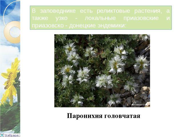 В заповеднике есть реликтовые растения, а также узко - локальные приазовские...