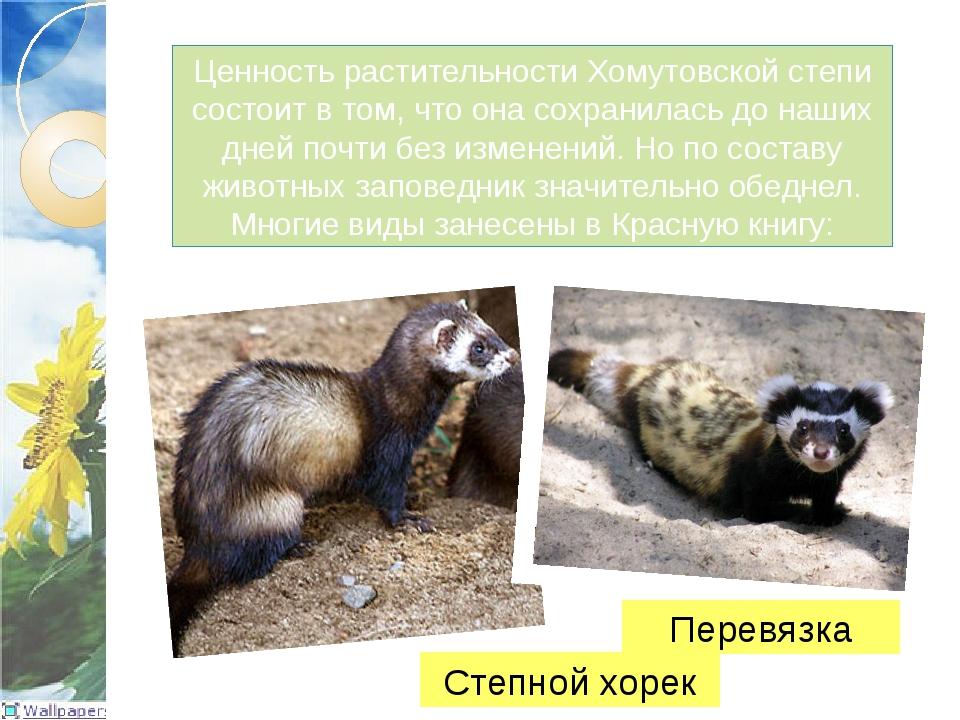Ценность растительности Хомутовской степи состоит в том, что она сохранилась...