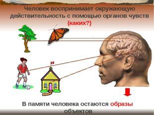 Человек воспринимает окружающую действительность с помощью органов чувств (ка