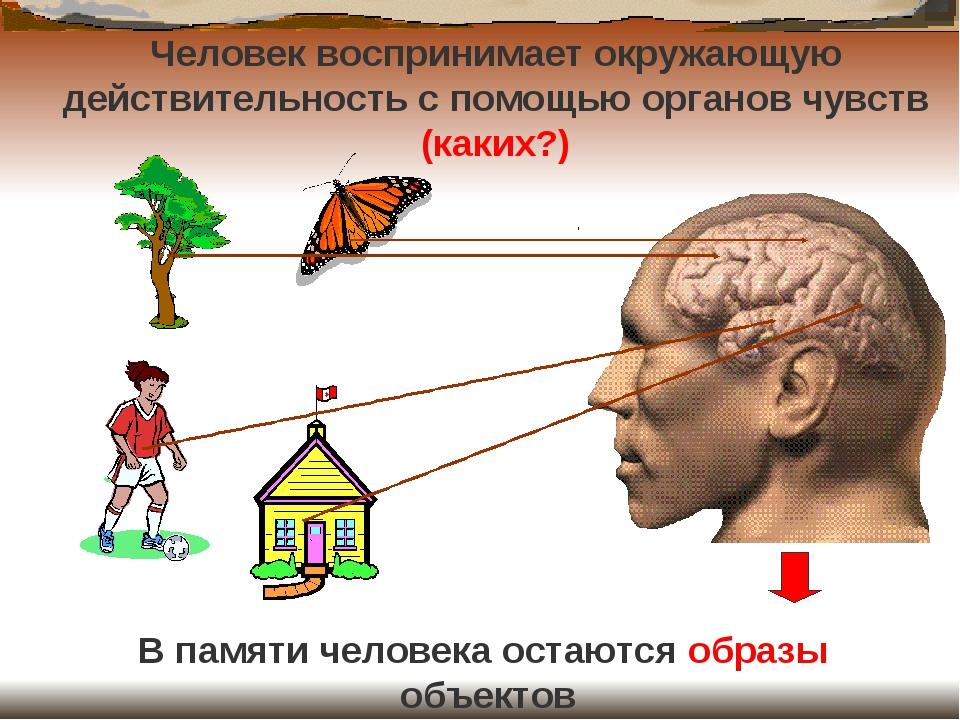 Человек воспринимает окружающую действительность с помощью органов чувств (ка...