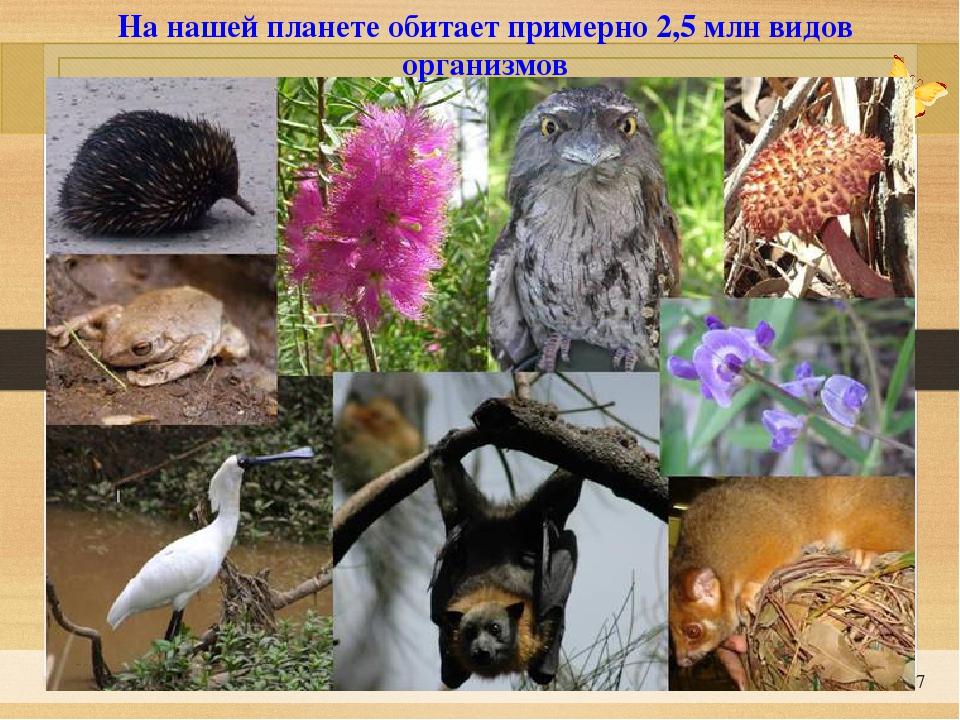 * На нашей планете обитает примерно 2,5 млн видов организмов