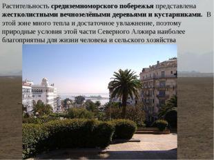Растительность средиземноморского побережья представлена жестколистными вечно