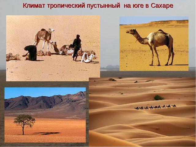 Климат тропический пустынный на юге в Сахаре