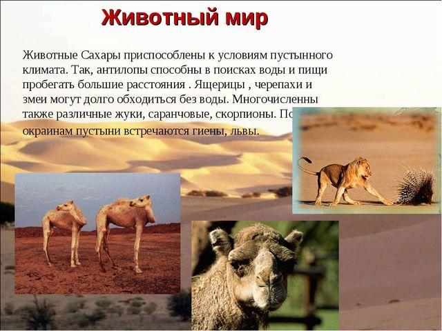 Животный мир Животные Сахары приспособлены к условиям пустынного климата. Та...