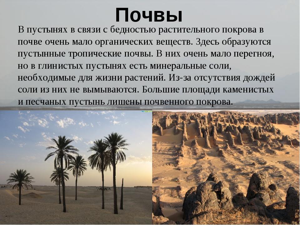 Почвы В пустынях в связи с бедностью растительного покрова в почве очень мал...