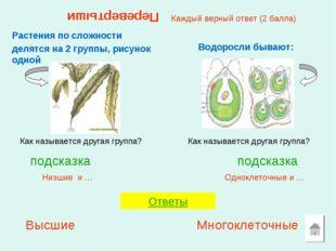 Перевертыши Растения по сложности делятся на 2 группы, рисунок одной Одноклет