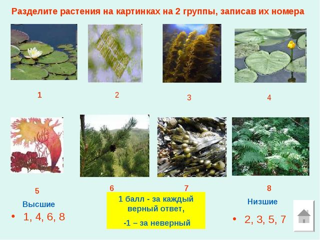 Разделите растения на картинках на 2 группы, записав их номера 1, 4, 6, 8 2,...