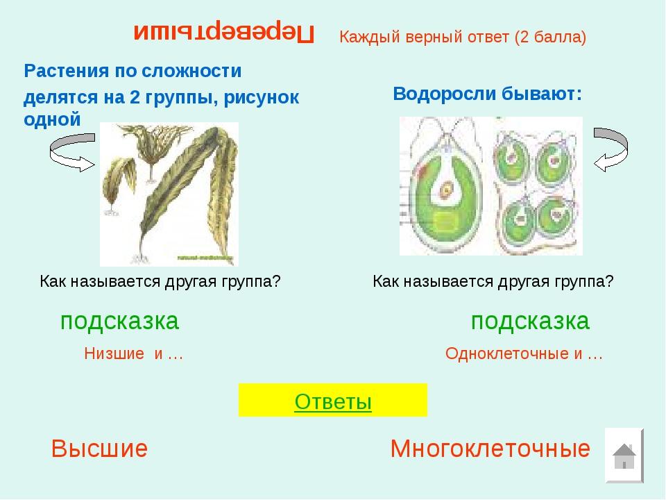 Перевертыши Растения по сложности делятся на 2 группы, рисунок одной Одноклет...