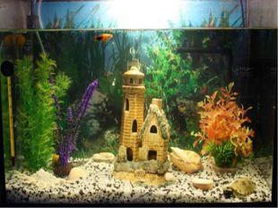 Отгадай Стеклянный домик на окне С прозрачною водой, С камнями и песком на дн