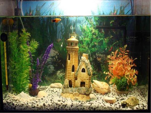Отгадай Стеклянный домик на окне С прозрачною водой, С камнями и песком на дн...