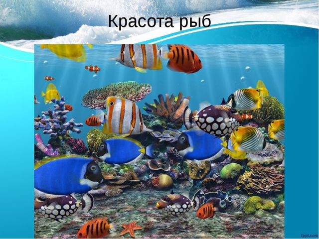 Красота рыб
