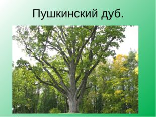 Пушкинский дуб.