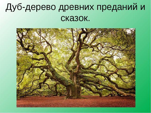 Дуб-дерево древних преданий и сказок.
