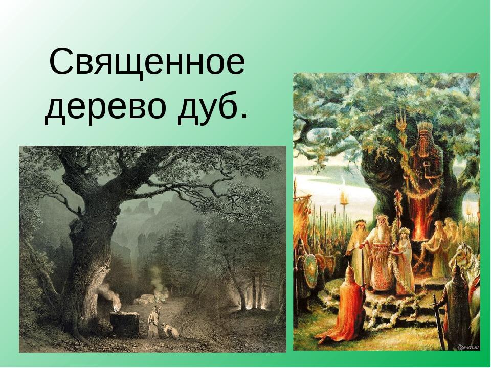 Священное дерево дуб.