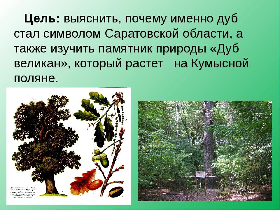 Цель: выяснить, почему именно дуб стал символом Саратовской области, а также...