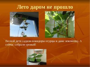 Лето даром не прошло Весной дети садили помидоры огурцы и даже землянику. А с