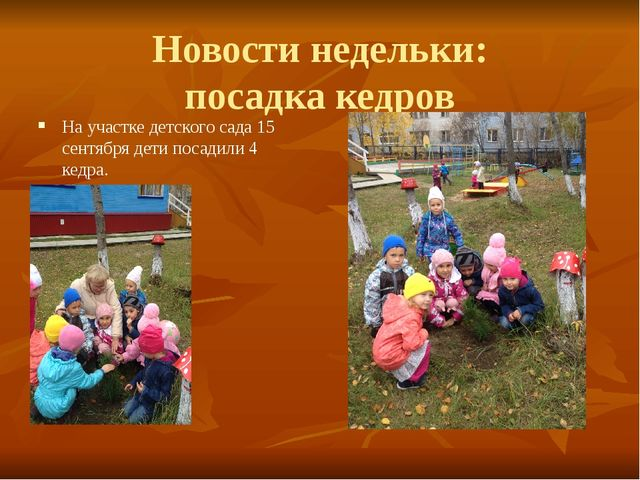 Новости недельки: посадка кедров На участке детского сада 15 сентября дети по...