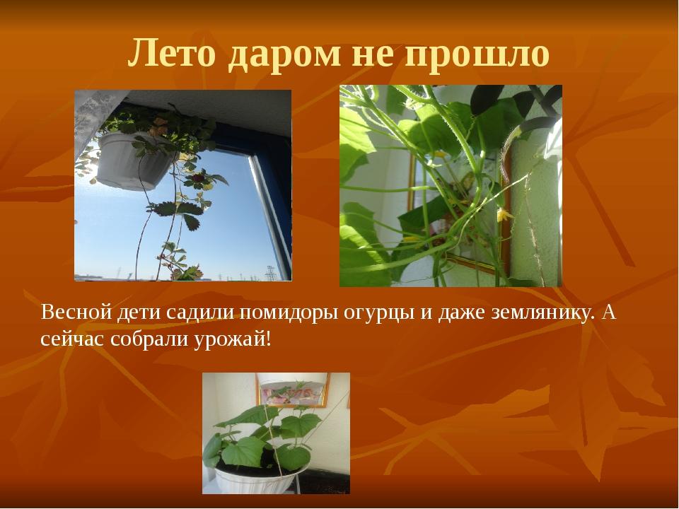 Лето даром не прошло Весной дети садили помидоры огурцы и даже землянику. А с...