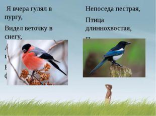 Непоседа пестрая, Птица длиннохвостая, Птица говорливая, Самая болтливая. Я в