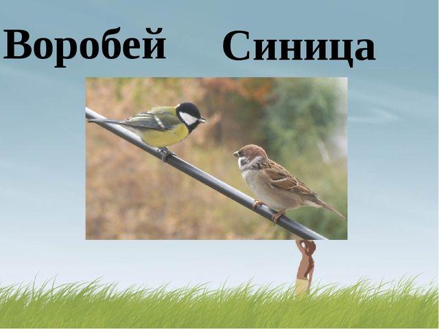 Воробей Синица