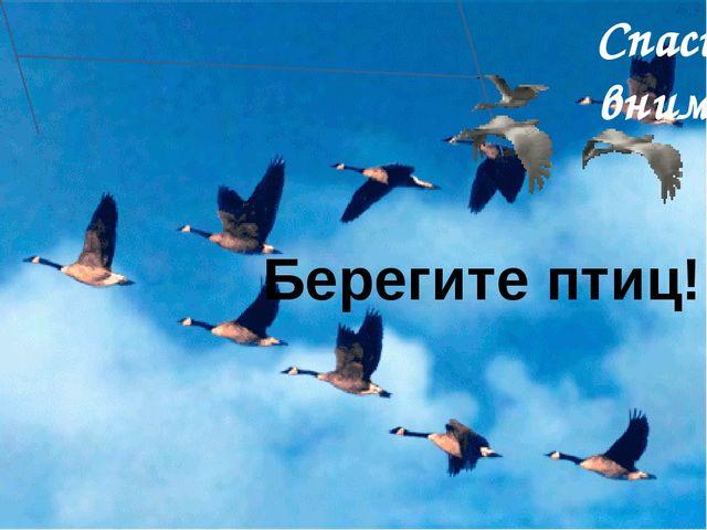 Берегите птиц! Спасибо за внимание!