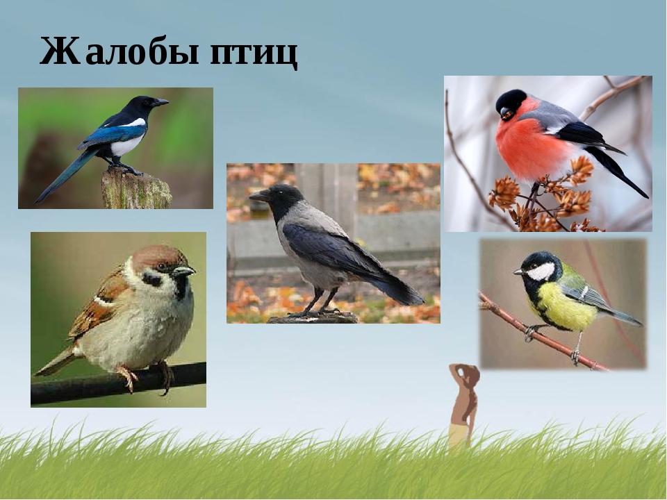 Жалобы птиц