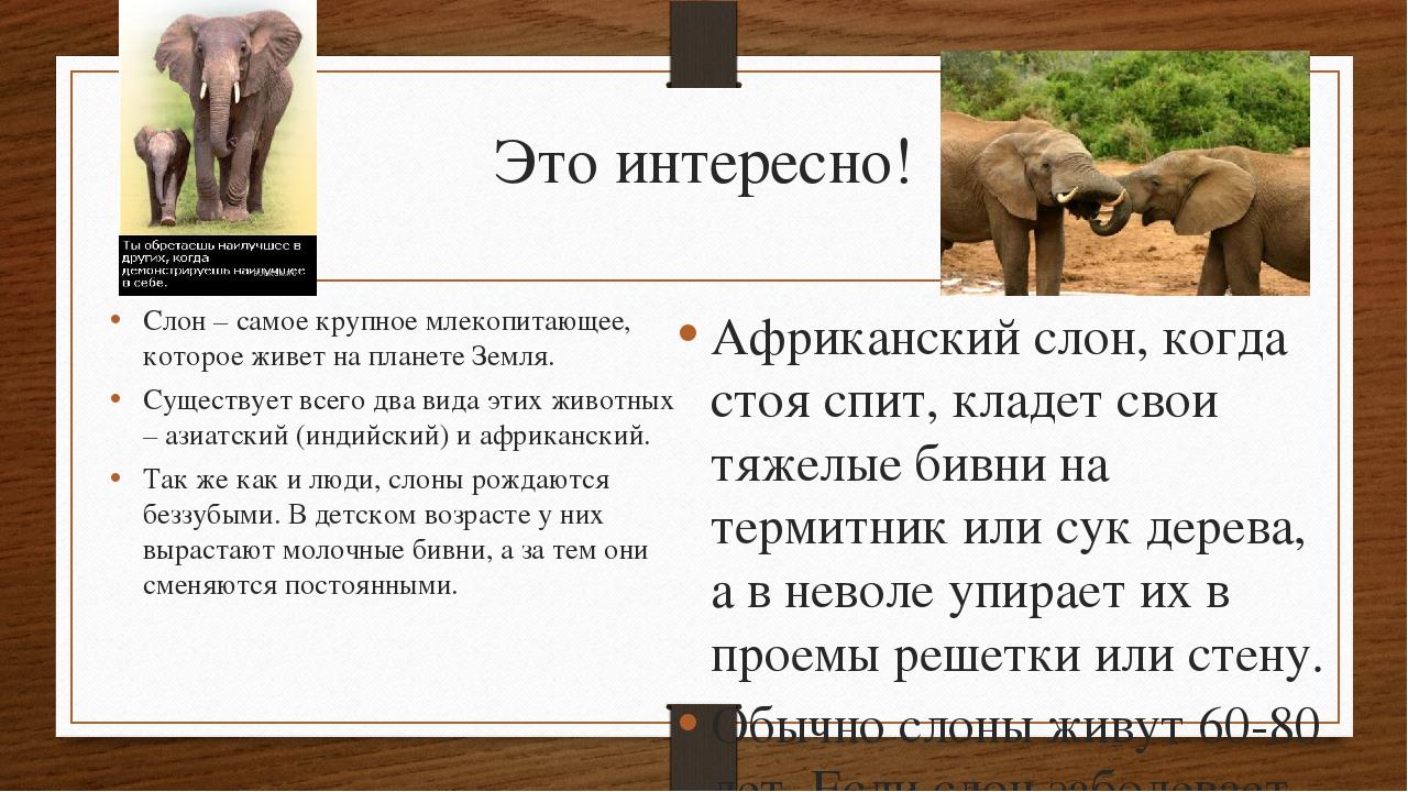Это интересно! Слон – самое крупное млекопитающее, которое живет на планете З...