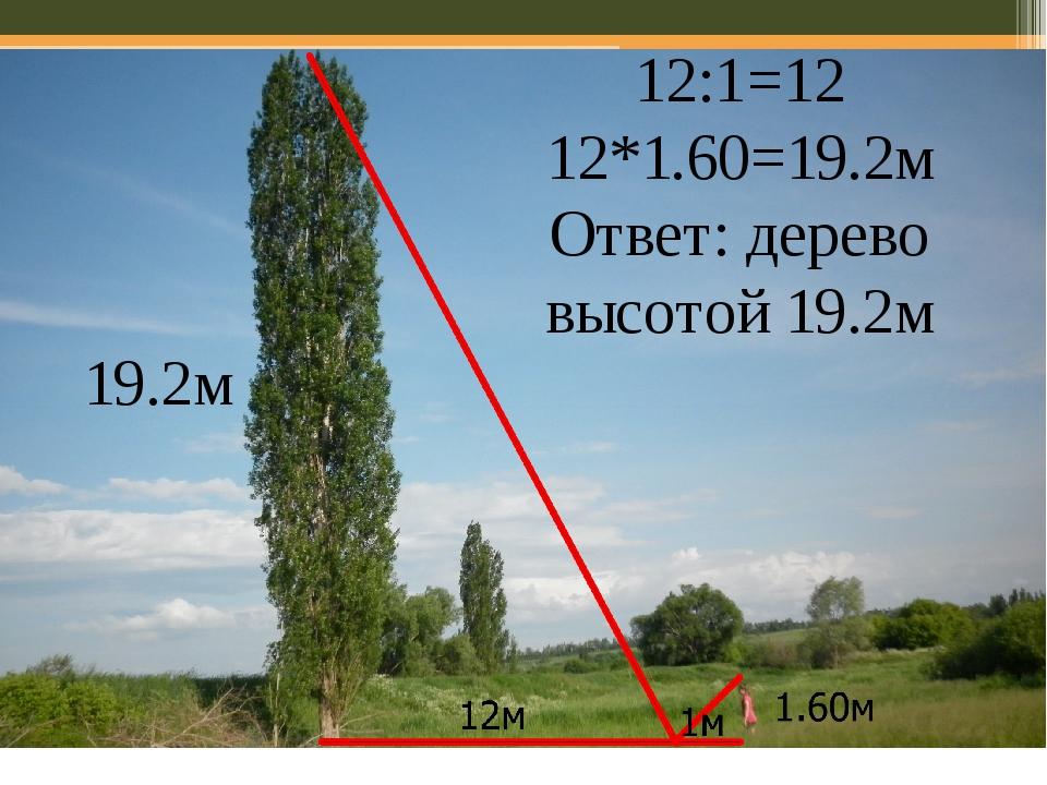 12:1=12 12*1.60=19.2м Ответ: дерево высотой 19.2м 19.2м