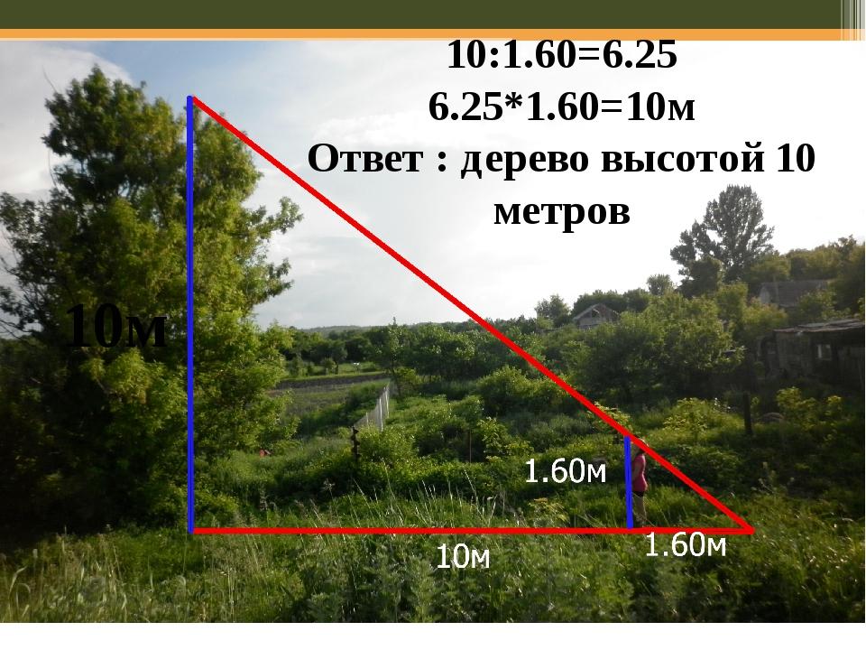 10:1.60=6.25 6.25*1.60=10м Ответ : дерево высотой 10 метров 10м