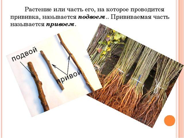 Растение или часть его, на которое проводится прививка, называется подвоем.....