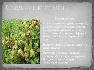 Малина лесная Многолетний кустарник высотой до 2м с волосистыми красноватыми