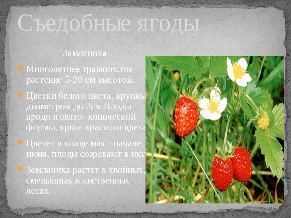 Земляника Многолетнее травянистое растение 5-20 см высотой. Цветки белого цве...