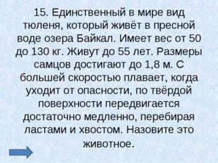 15. Единственный в мире вид тюленя, который живёт в пресной воде озера Байкал