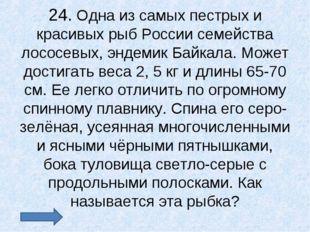 24. Одна из самых пестрых и красивых рыб России семейства лососевых, эндемик