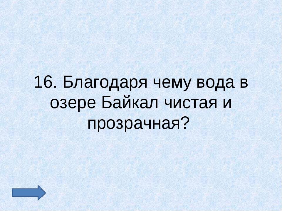 16. Благодаря чему вода в озере Байкал чистая и прозрачная?