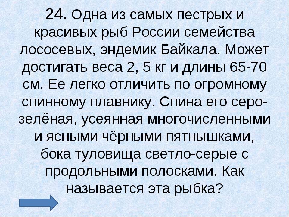 24. Одна из самых пестрых и красивых рыб России семейства лососевых, эндемик...