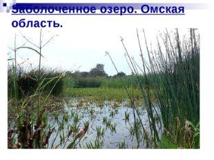 Заболоченное озеро. Омская область.