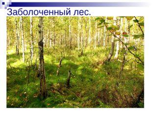 Заболоченный лес.