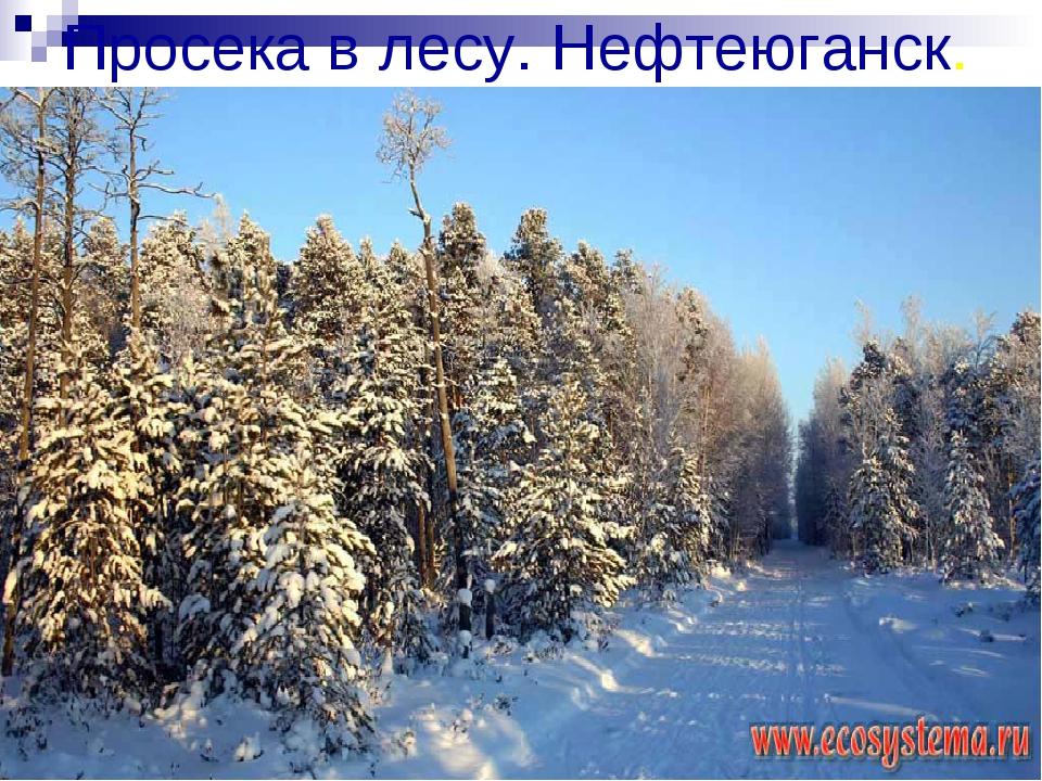 Просека в лесу. Нефтеюганск.