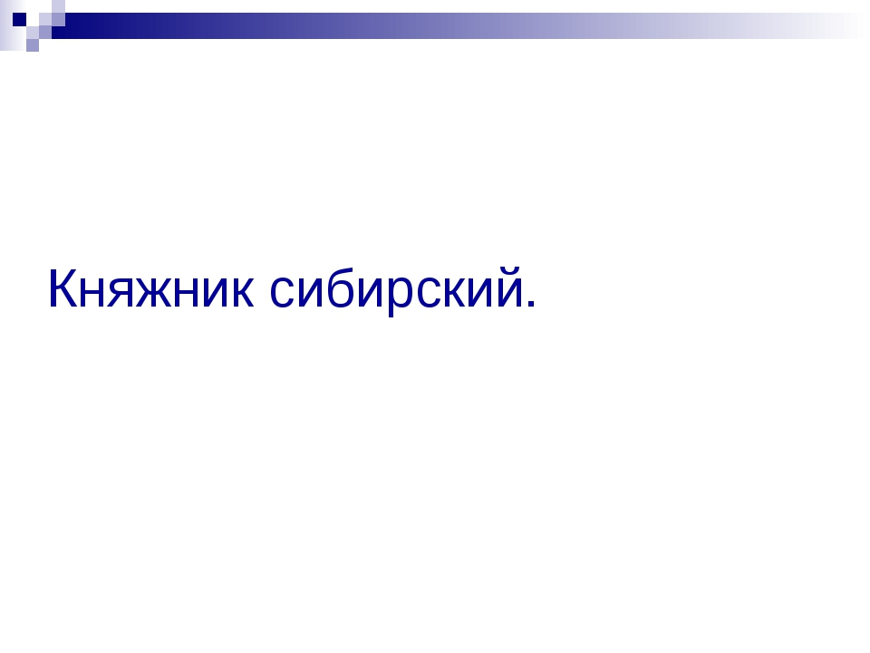 Княжник сибирский.