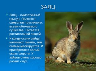 ЗАЯЦ Заяц – симпатичный грызун. Является символом трусливого, всеми обижаемог