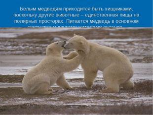 Белым медведям приходится быть хищниками, поскольку другие животные – единств
