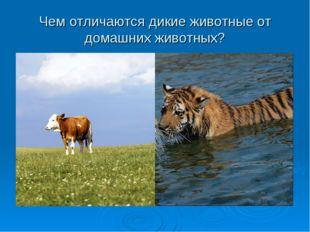 Чем отличаются дикие животные от домашних животных?