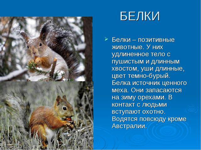 БЕЛКИ Белки – позитивные животные. У них удлиненное тело с пушистым и длинны...