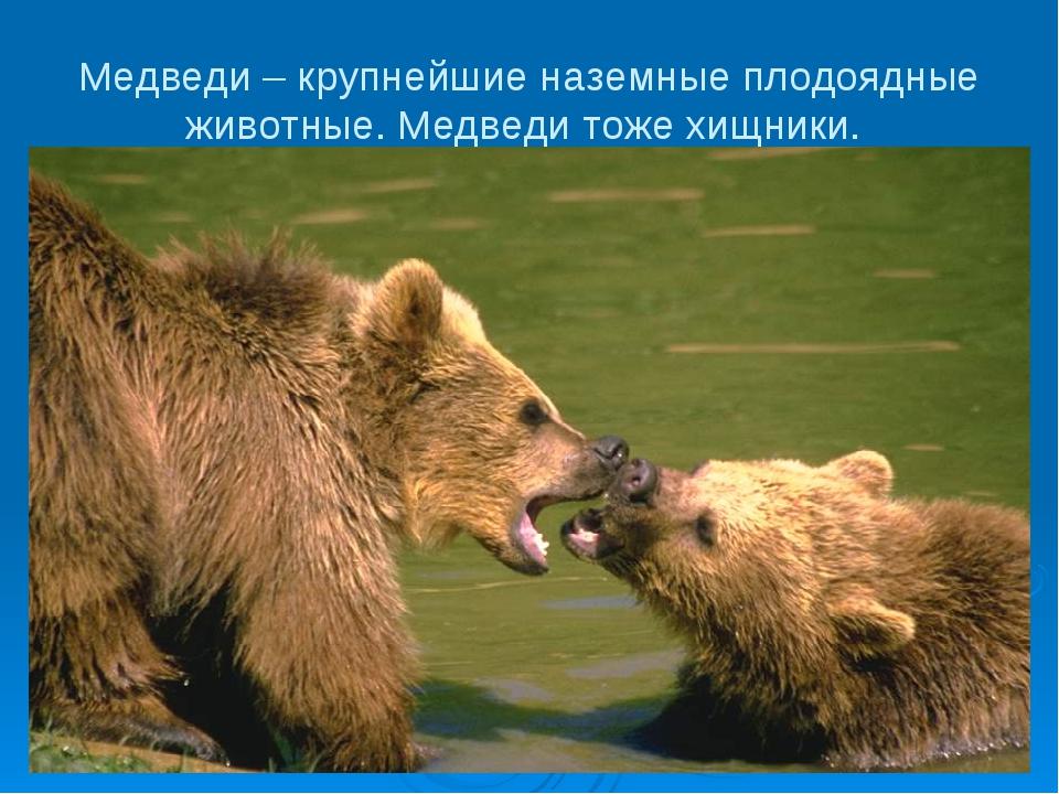 Медведи – крупнейшие наземные плодоядные животные. Медведи тоже хищники.