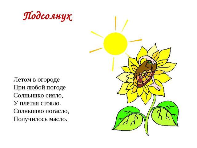 Подсолнух Летом в огороде При любой погоде Солнышко сияло, У плетня стояло. С...