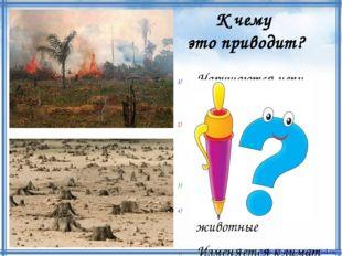 Нарушаются цепи питания Уменьшается количество кислорода Разрушается почва Ги
