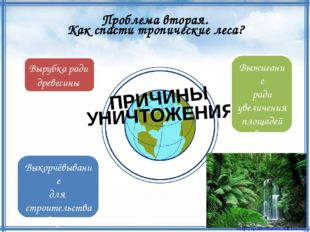 Как спасти тропические леса? Проблема вторая. ПРИЧИНЫ УНИЧТОЖЕНИЯ Вырубка рад