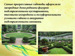 Самые прогрессивные садоводы оформляли загородные дома редкими фигурно подстр