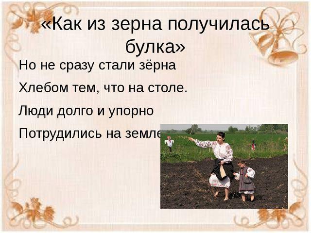 «Как из зерна получилась булка» Но не сразу стали зёрна Хлебом тем, что на ст...